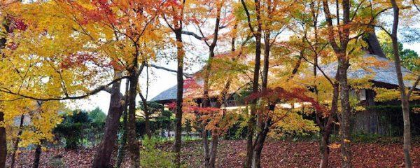 秩父宮記念公園(暮の秋)